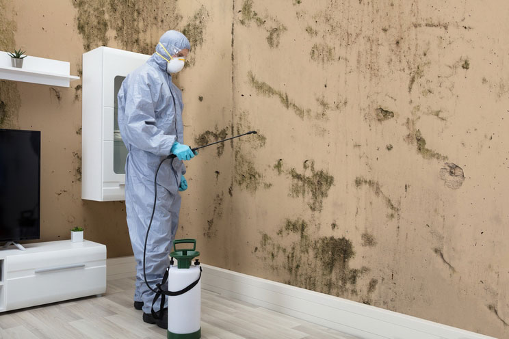 How to Get Rid of Black Mold. Professional Treatment